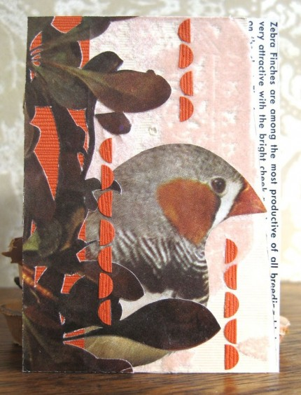 Bird Collage- Finch and Wallpaper ACEO 03  by OhMyAmpersand
