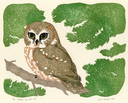 Northern Saw Whet Owl  by fustian